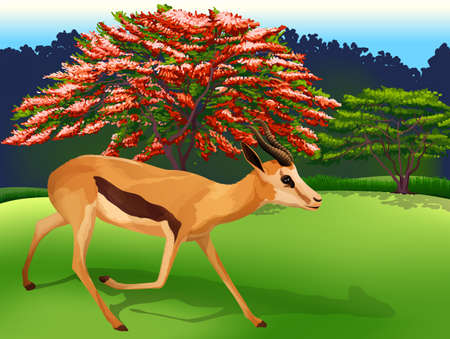 Illustration of a deer Vector