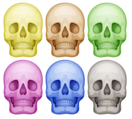 Illustration of the colorful skulls on a white background Vector