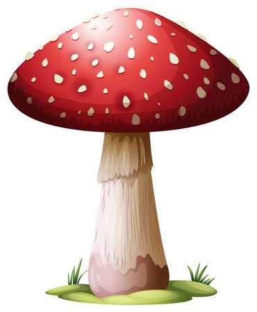 Illustration of a Royal Agarics on a white background Vector