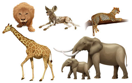 g giraffe: Illustration of the African animals on a white background