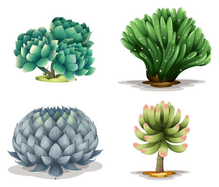 transpiration: Illustration of the different cacti on a white background