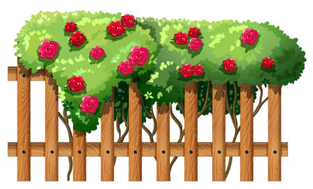 Illustration of a flowering plant with a fence on a white background Vector