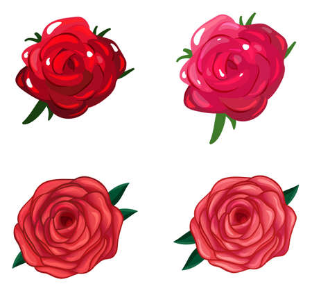 rosaceae: Illustration of a rose flower on a white background