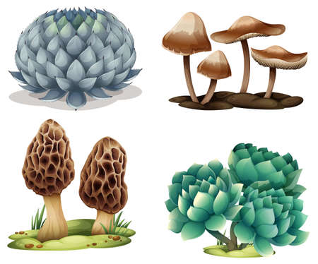 plantae: Illustration of cactus and mushrooms on a white background