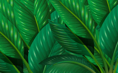Illustration of the leaves
