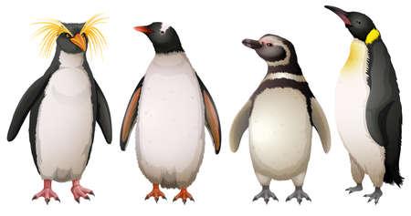 Illustratie van de Penguins op een witte achtergrond