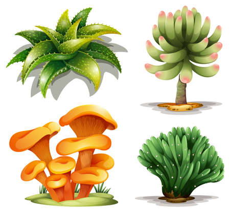 mycology: Illustration of the different plants on a white background Illustration