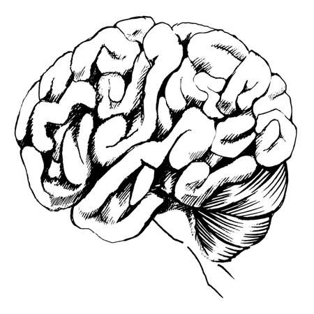 centralized: Illustration of the human brain on a white background