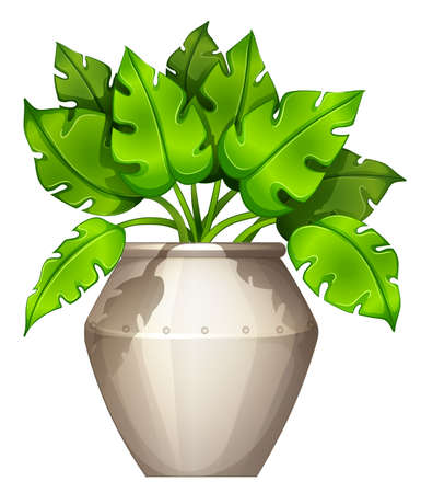 clay pot: Illustration of a plant with a heart-shaped leaves on a white background Illustration