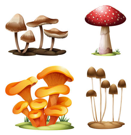 macroscopic: Illustration of the different species of mushrooms on a white background