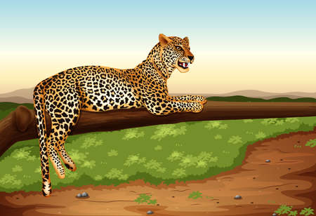 stealthy: Illustration of a leopard
