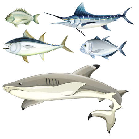 marine fish: Illustration of the fishes on a white background Illustration