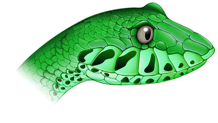 ectothermic: Illustration of a scary snake on a white background