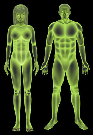 females: Illustration of the male and female human body