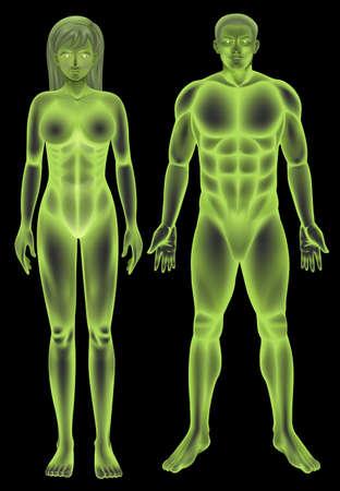 partes del cuerpo humano: Ilustración del cuerpo humano masculino y femenino Vectores