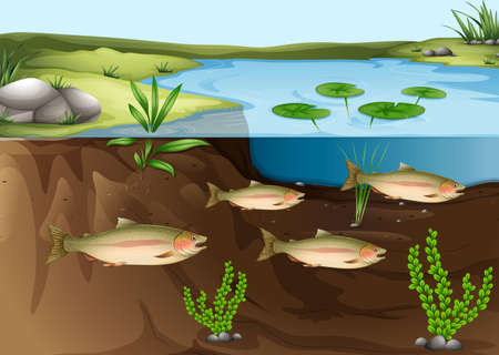 Illustration of an ecosystem under the pond