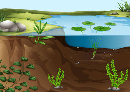 pond water: Illustration of a pond ecosystem