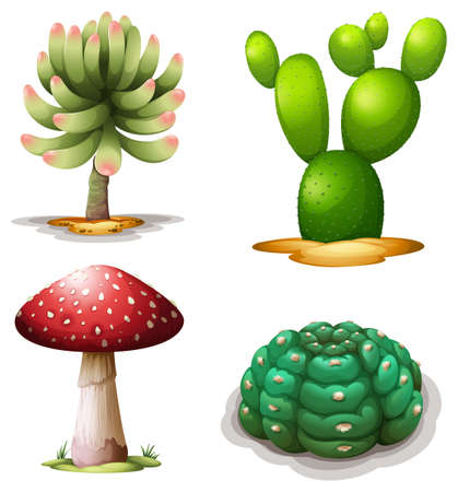 spines: Illustration of a mushroom and cacti on a white background Illustration
