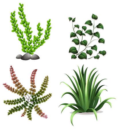 plantae: Illustration of the plants on a white background Illustration