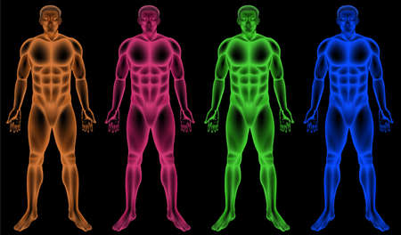 Illustration of the male coloured bodies Vector