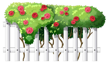 rosaceae: Illustration of a white wooden fence with flowering plants on a white background Illustration