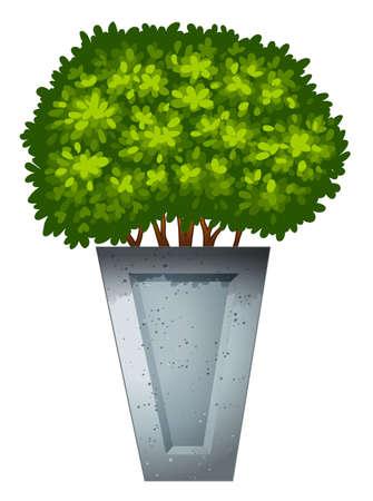 plantae: Illustration of a green ornamental plant on a white background Illustration
