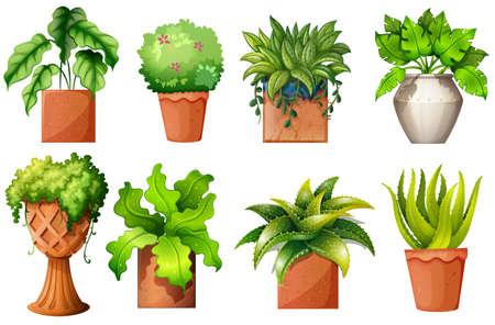 Illustration d'une collection de différentes plantes en pot sur un fond blanc