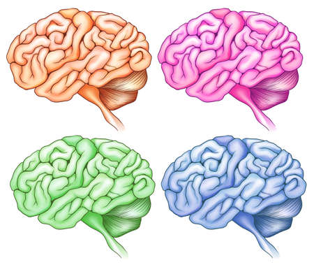 auditory: Illustration of the human brains on a white background Illustration