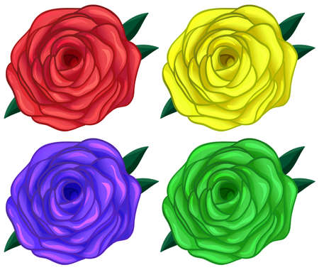 Illustration of the four colorful roses on a white background Illustration