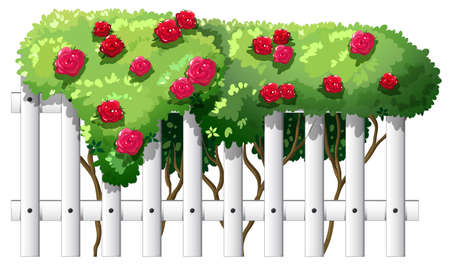panelling: Illustration of a fence with rose plants on a white background