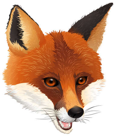 omnivorous: Illustration of a fox on a white background
