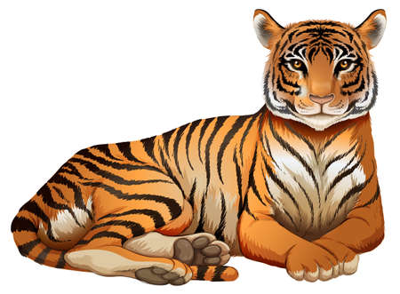 Ilustración de un tigre sobre un fondo blanco