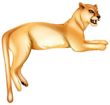 cougar: Illustration of a panther on a white background