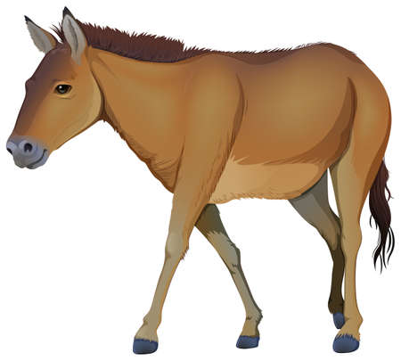 brown horse: Illustration of a brown horse on a white background