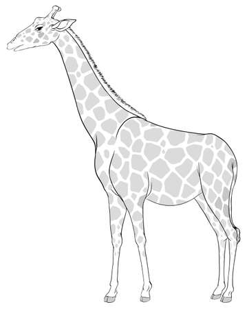 Illustration of a sketch of a giraffe on a white background