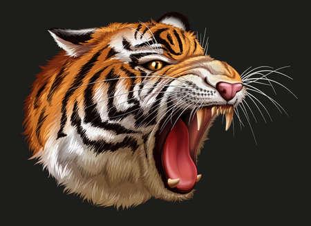 chordata: Illustration of a head of a roaring tiger Illustration