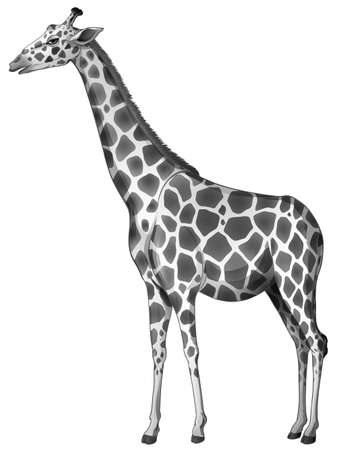 Illustration of a giraffe on a white background