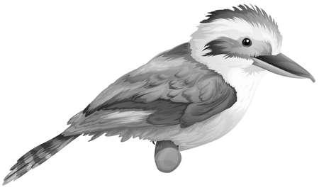 coraciiformes: Illustration of a kookaburra on a white background