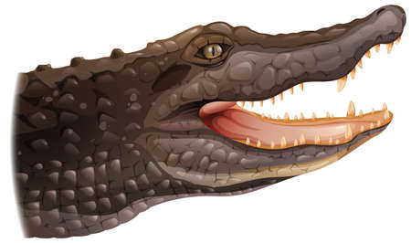chordata: Illustration of a crocodile on a white background