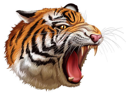 mammalia: Illustration of a head of a roaring tiger on a white background