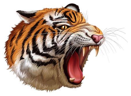 panthera: Illustrazione di una testa di una tigre ruggente su uno sfondo bianco