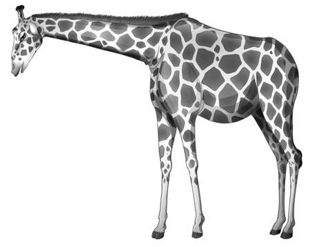 g giraffe: Illustration of a grey giraffe on a white background