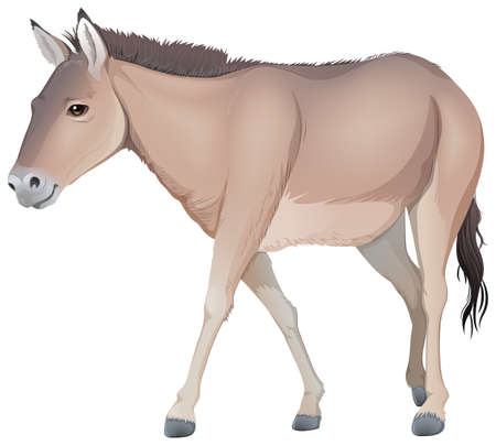 jack ass: Illustration of a donkey on a white background