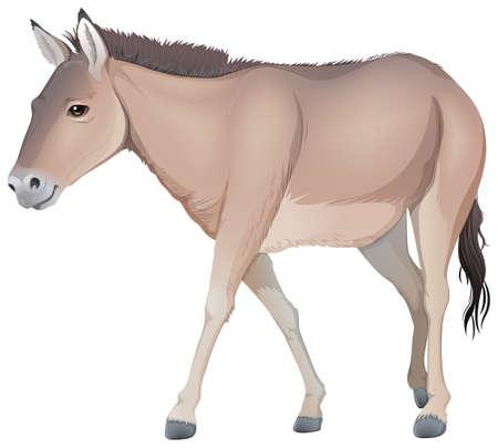 jenny: Illustration of a donkey on a white background