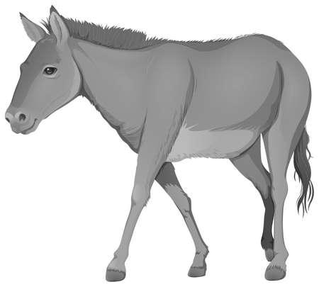 chordata: Illustration of a grey donkey on a white background