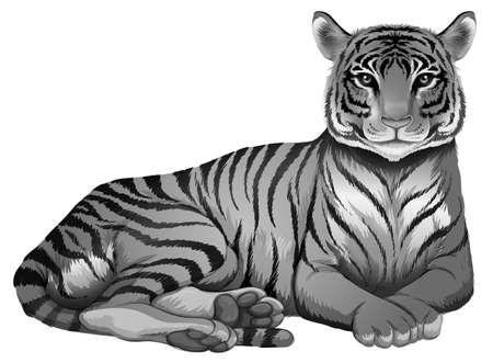 panthera tigris sumatrae: Illustration of a grey tiger on a white background