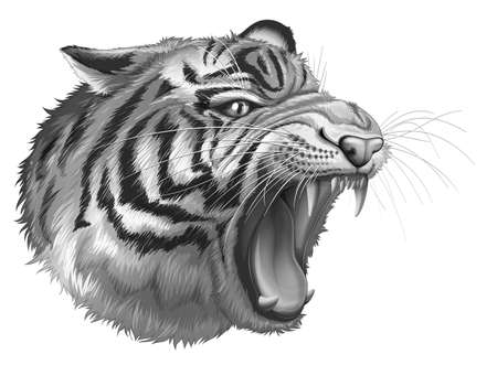 panthera: Illustration of a grey tiger roaring on a white background