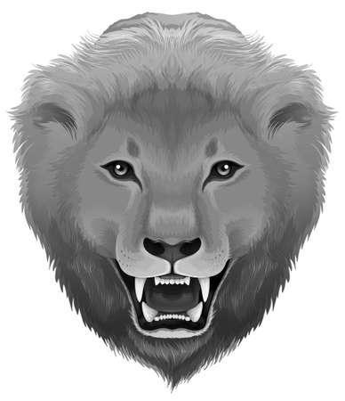 chordata: Illustration of a grey lion on a white background