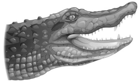chordata: Illustration of a grey crocodile on a white background