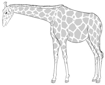 giraffa: Illustration of a sketch of a giraffe on a white background